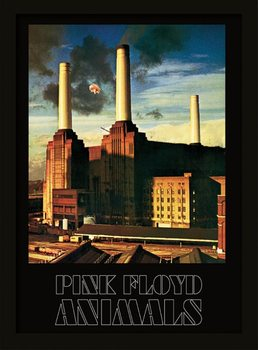 Framed poster Pink Floyd - Animals