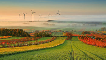 Art Print on Demand Autumn Atmosphere in Vineyards