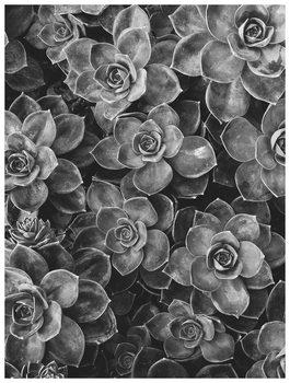 Illustration border succulent