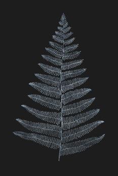 Illustration Botanica Minimalistica Bleu