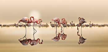Art Print on Demand Flamingos Ii
