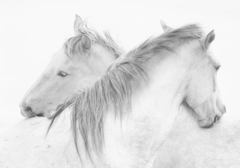 Art Print on Demand Horses