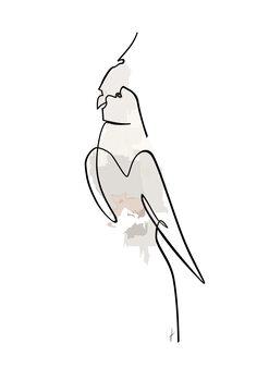 Illustration Papagalo colore
