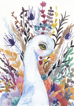 Illustration Peacock