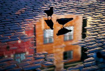 Art Print on Demand Pigeons