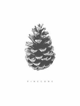 Illustration pinecone