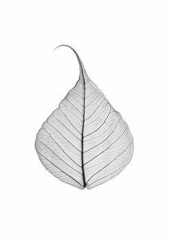 Art Print on Demand Skeleton leaf