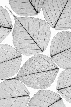 Art Print on Demand Skeleton leaf ii