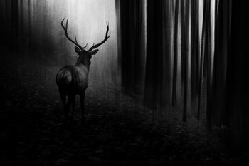 Art Print on Demand Stag
