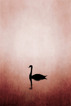Illustration Swan Lake
