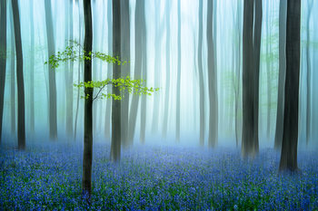 Art Print on Demand the blue forest ........