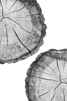 Art Print on Demand Tree