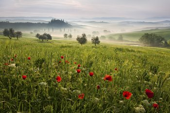 Art Print on Demand Tuscan spring