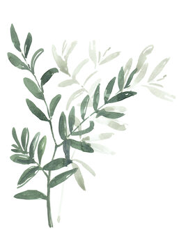 Illustration Watercolor laurel branch