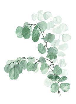 Illustration Watercolor silver dollar eucalyptus