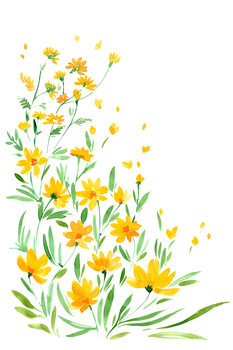 Illustration Yellow watercolor wildflowers