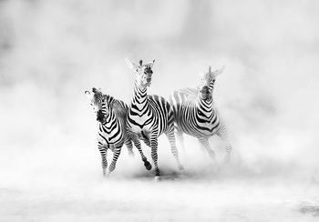 Art Print on Demand Zebras