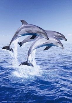 3D Poster Dolphin trio