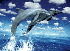 3D Poster Dolphins leap