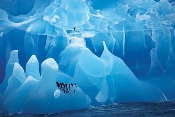Arctic wonderland – penquins Poster