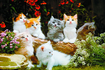 Baby cats Poster