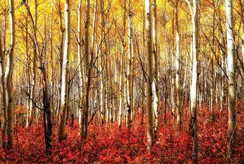 Birch Grove Red - Aspen Grove Red Poster