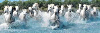 Camar gue horses Poster