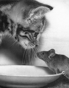 Cat and mouse - paul kaye Poster
