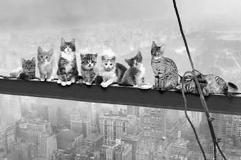 Cats on girder Poster