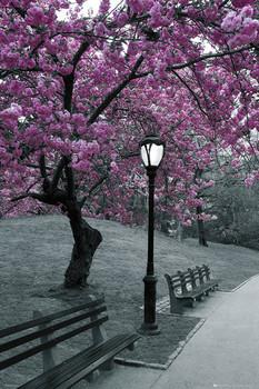 Poster Central Park - blossom