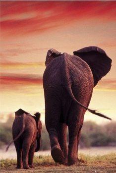 Elephant Sunset Framed Poster