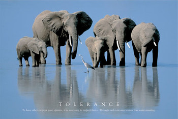 Elephant tolerance Poster