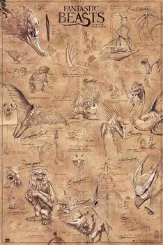 Poster Fantastic Beasts - Animals