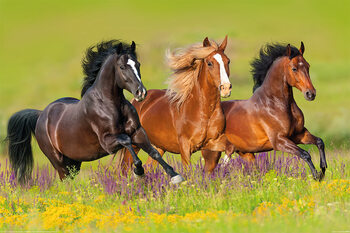 Poster Horses - Run