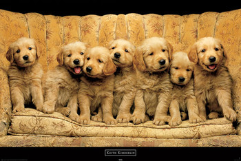 Keith Kimberlin - golden dogs Poster