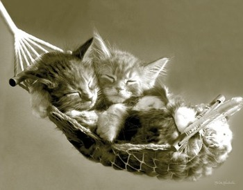KEITH KIMBERLIN - kittens in a hammock Poster, Art Print