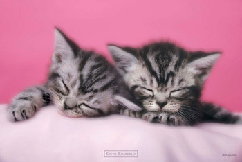 Keith Kimberlin - pink kitten Poster