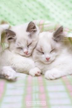 Poster Keith Kimberlin – sleepy cats