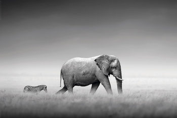 Kings of Nature - Elephant and Zebra Poster