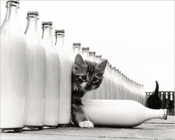 Kitten - in paradise Poster