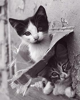 Kitten - two Poster