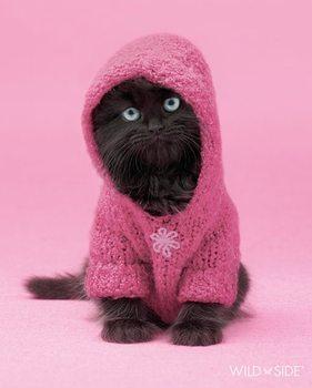 Kitten - wildside Poster
