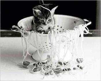 Kitten - with spaghetti Poster