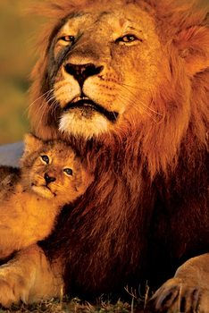 Lion and baby - lions Poster