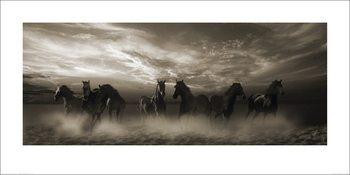 Malcolm Sanders - Wild Stampede Art Print