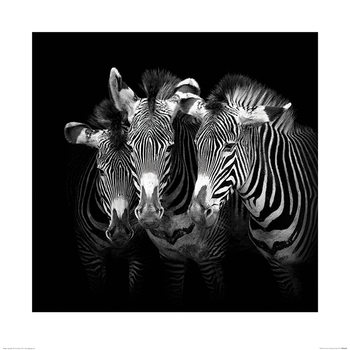 Marina Cano - Shades of Grevy Art Print