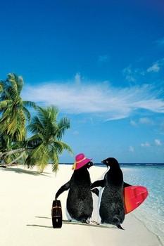 Penquin paradise Poster