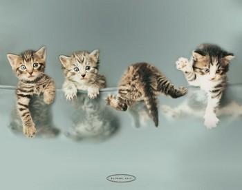 RACHAEL HALE - kittens Poster