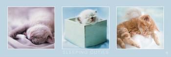 Rachael Hale - sleeping cuties Poster