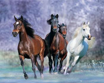 Running horses - bob langrish Poster